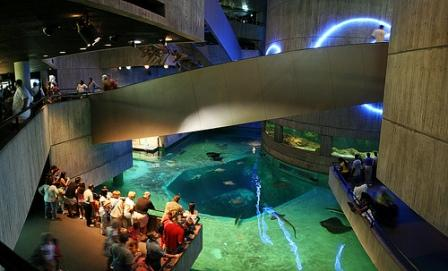 13 Of The Worlds Best Aquariums The Travelers Zone