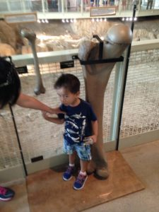 Tyler measuring up to a leg bone at Waco Mammoth