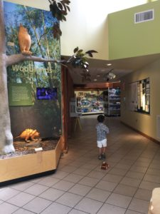 Tyler walking around the Visitor Center at Davis Bayou