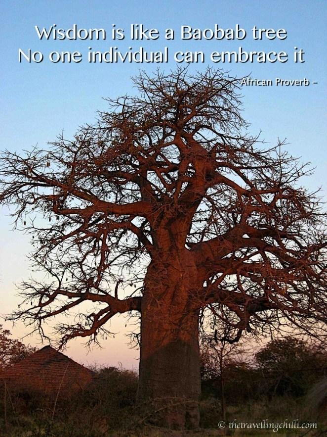 botswana tree baobab quote wisdom is like a baobab tree