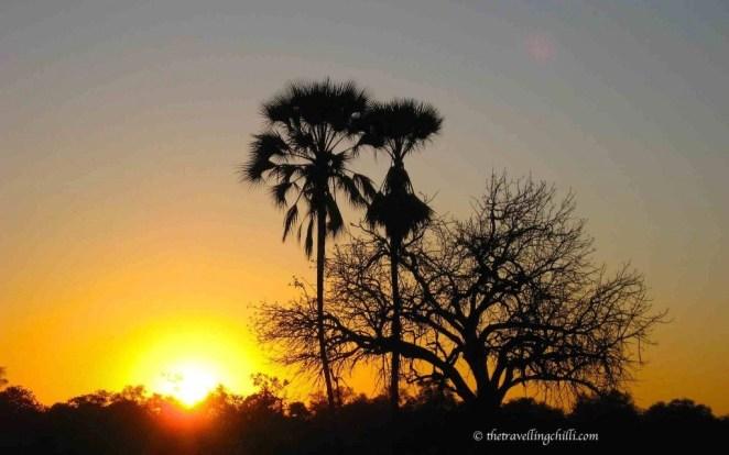 botswana delta sunset okavango palmtree