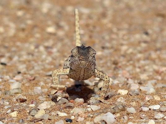 living desert tour namibia swakopmund