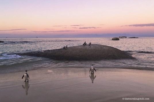 penguins boulders beach Simons town