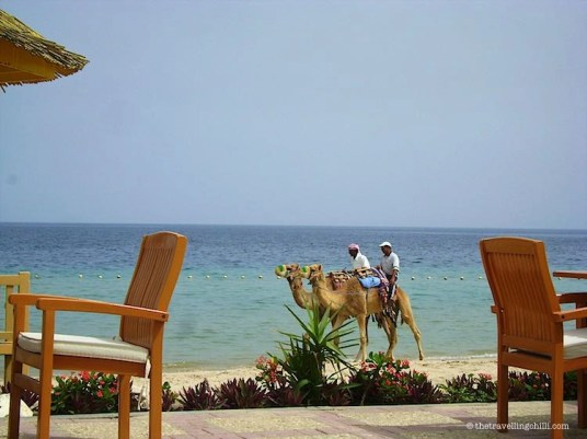 Saline Beach resort Qatar