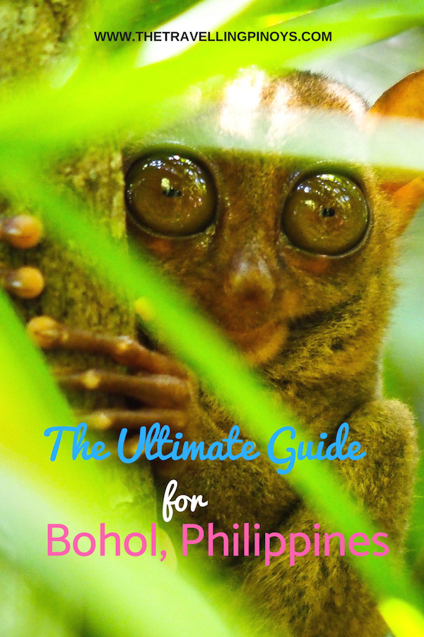 THE ULTIMATE GUIDE FOR BOHOL PHILIPPINES |  Philippines Vacation  | Travel Philippines #philippines #travel #traveltips