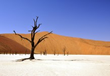 namibia visa dead vlei