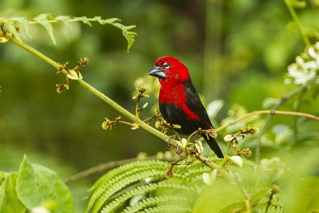Things to do in Ghana - birdwatch at Kakum National Park