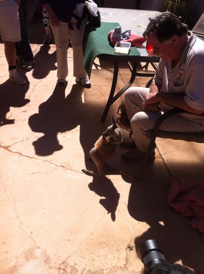 Josephine's Kangaroo orphanage