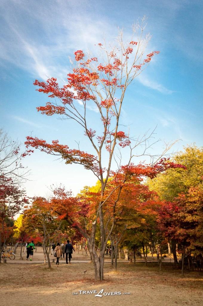秋天的色調很和諧。