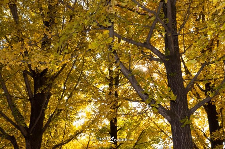 葉縫之間滲出一點點柔和的陽光,很溫暖。