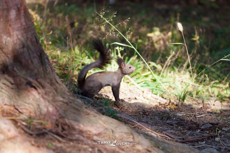 南怡島很多地方都會見到松鼠,很可愛呢!
