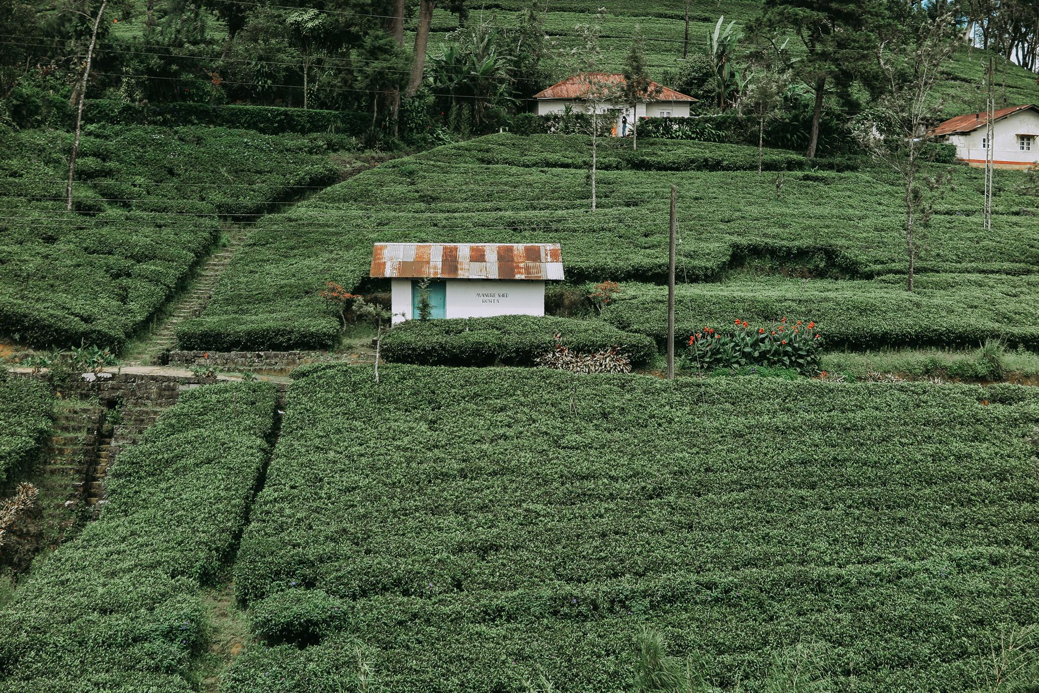 Sri Lanka Train Tea Plantation