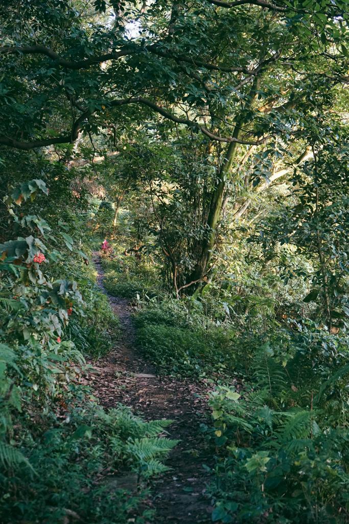 Side trails Elephant Mountain