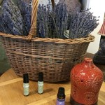 Essential Oil Blend of the Month: Immunity Blend