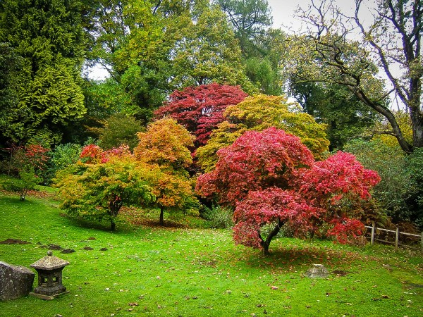 ornamental trees japanese gardens The Complete Japanese Maple Guide | The Tree Center™