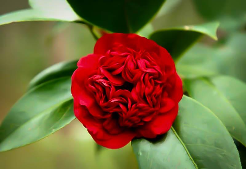 Names Flowering Shrubs