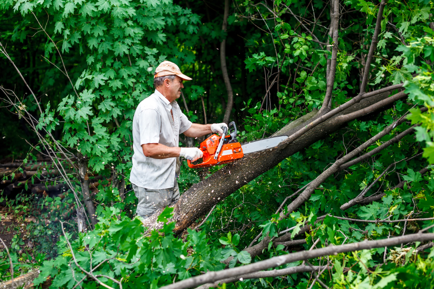 Image result for Tree Trimming istock