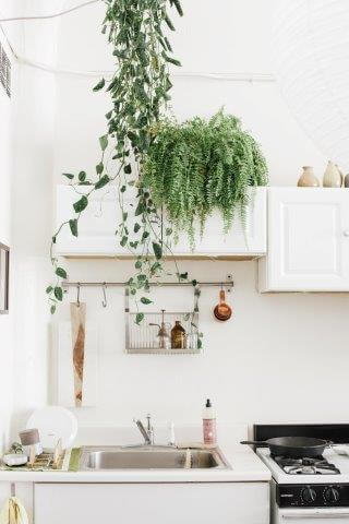 houseplants-are-back-as-chic-decor-5