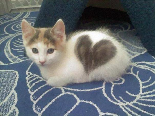 Kitten With a Heart