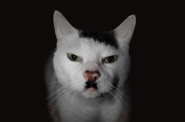 The Kitler Cat