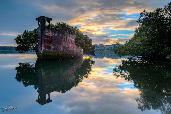 Over 100-Year-Old Floating Forest in Sydney, Australia