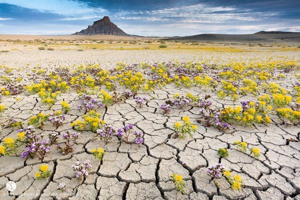 blooming-desert-badlands-utah-11