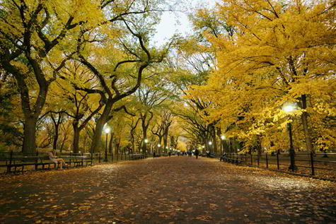 Poet's Walk, Central Park, New York