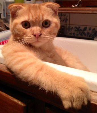 cat-loves-water-bath-37__605