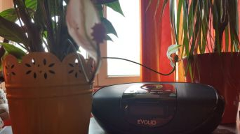 Evolio sistem audio smart (11)