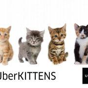 UberKittens sau 15 minute de iubire necondiționată