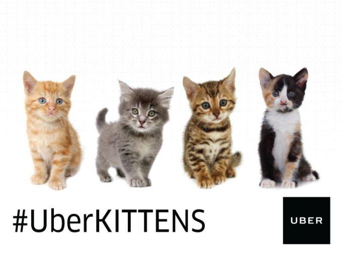 #UBERKittens