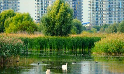 """""""Păsările orașului"""", un proiect de monitorizare a avifaunei din Parcul Natural Văcărești"""