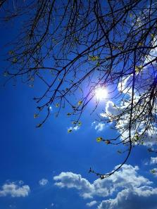 foto natura - FOTO Samsung Galaxy S8 Plus