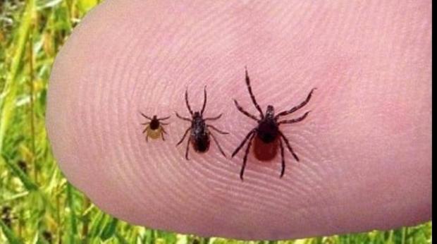 Tips & Tricks: cum să recunoști simpotomele și să tratezi mușcăturile de insecte, păianjeni sau șerpi
