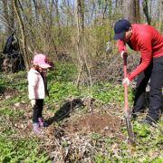1.000 de puieți de stejar au fost sădiți în Pădurea Băneasa