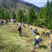 La inițiativa Bergenbier, am plantat brazi alături de alți 150 de voluntari