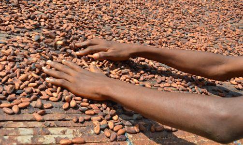 Mondelēz va asigura 100% din volumul de cacao pentru toate brandurile sale de ciocolată