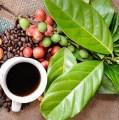7 curiozități despre cafea – una dintre cele mai populare băuturi din lume, după apă!