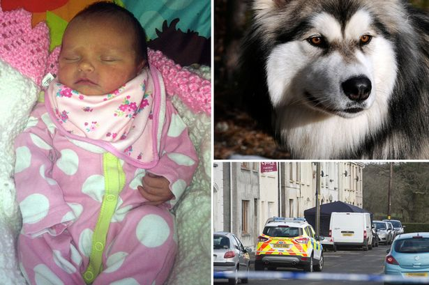 Eliza-Mae Mullane died after being attacked by her family's pet dog