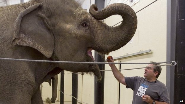 Laurita opened the non-profit facility in 2011, receiving its first elephants, Opal and Rosie, the next year [Photo Credit: AP]