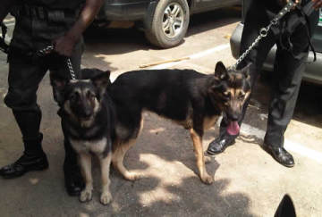 The two German shepherd dogs at the police headquarters in Ikeja, on Tuesday, October 21, 2014. (Photo Credit:Punch)