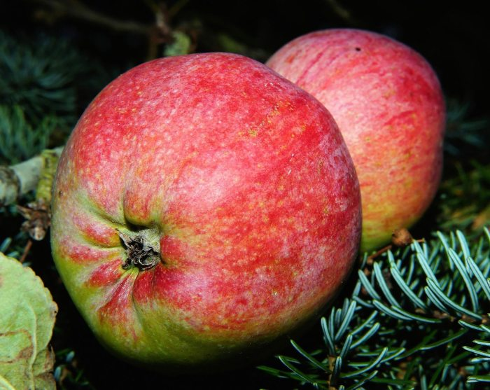 apple-482560_1920