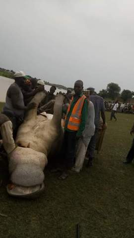 Huge Hippopotamus caught on Thursday, August 6, 2015 at the Dadinkowa dam town of Gombe State after over one week of terrorizing residents. (Photo Credit: Twitter/ Naziru Muktar)