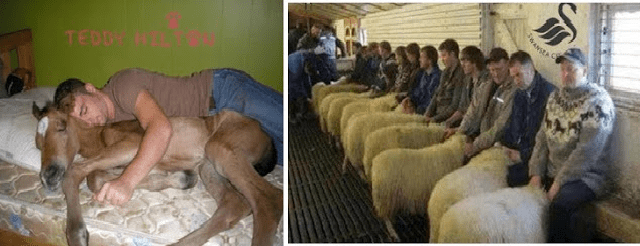 Do people really have sex with sheep