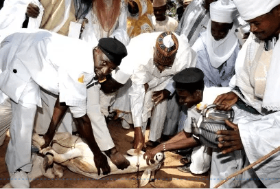President Muhammadu Buhari (m) slaughtering a ram for Eid-el-Kabir celebration at the Daura Eid prayer ground in Katsina State on 24 September, 2015 | NAN