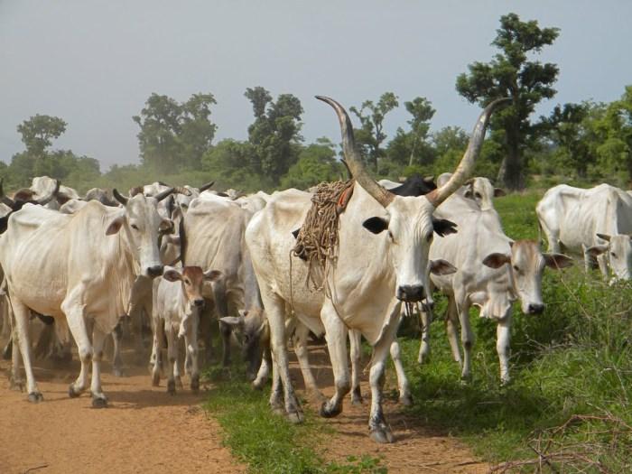 Fulani Herdsmen, Muhammadu Buhari, Self defence