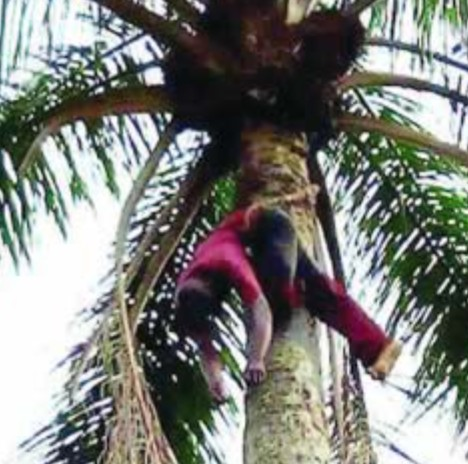 Wine Tapper Found Dead Hanging On Palm Tree In Imo (PHOTO)