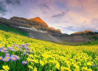 Valley of Flowers in India