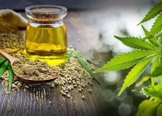 cbd oil beginners marijuana cannabis weed cbd oil