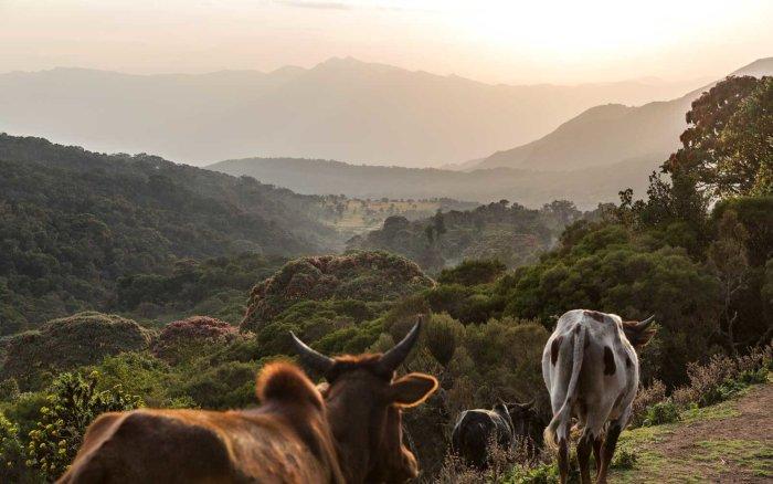 Ethopia's Bale Mountains National Park